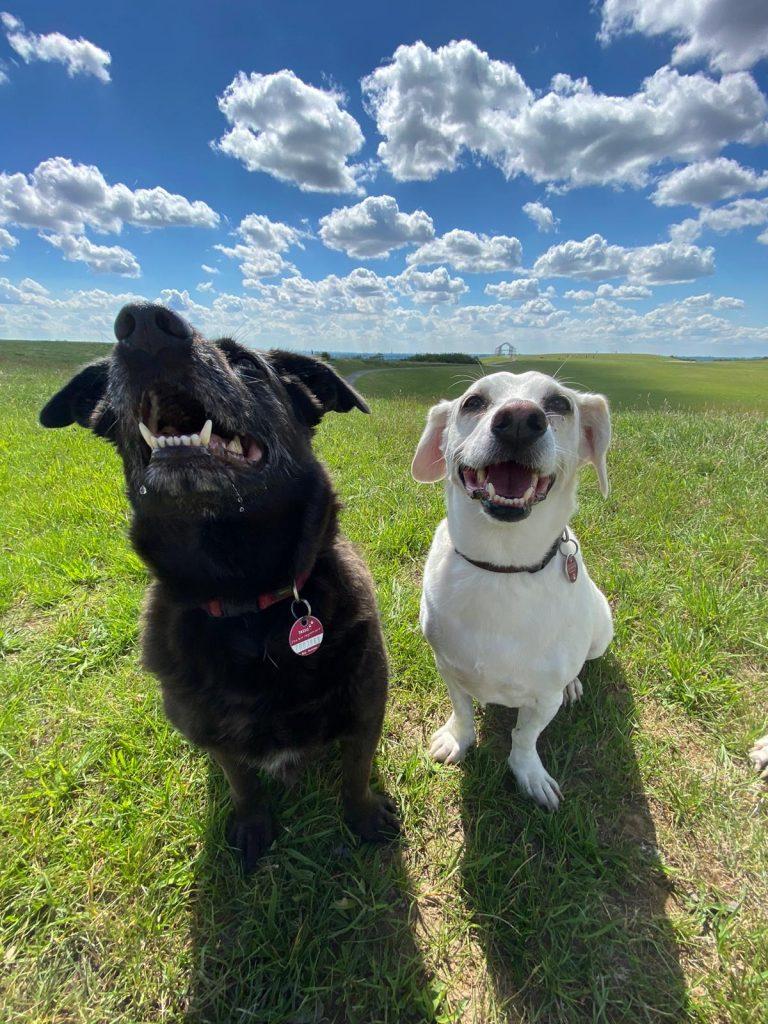Schwangerschaft und unsere Hunde